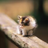 记一只萍水相逢的小猫